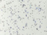 Кухонная столешница ALPHALUX, морозная искра, матовая, R6, влагостойкий, 1200*39*1500 мм