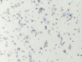 Стеновая панель HPL пластик ALPHALUX морозная искра,S.S001 MAT МДФ, 4200*6*600 мм